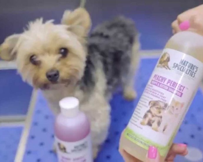puppy-shampoo-for-sell