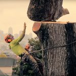 local tree services