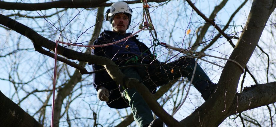 Tree-prunning-service-in-city