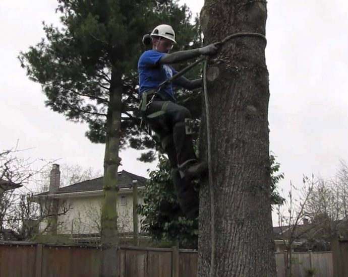 Tree removal in city