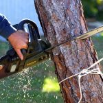 A set of hands using a chainsaw on a tree trunk