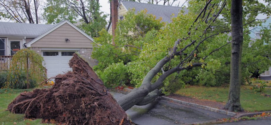Downed Tree after Storm